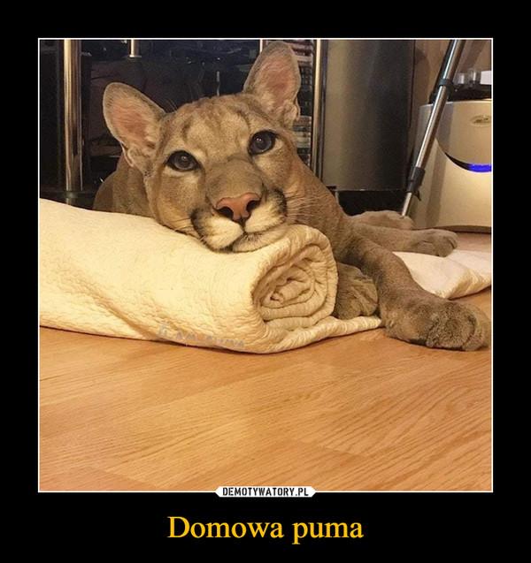 Domowa puma –