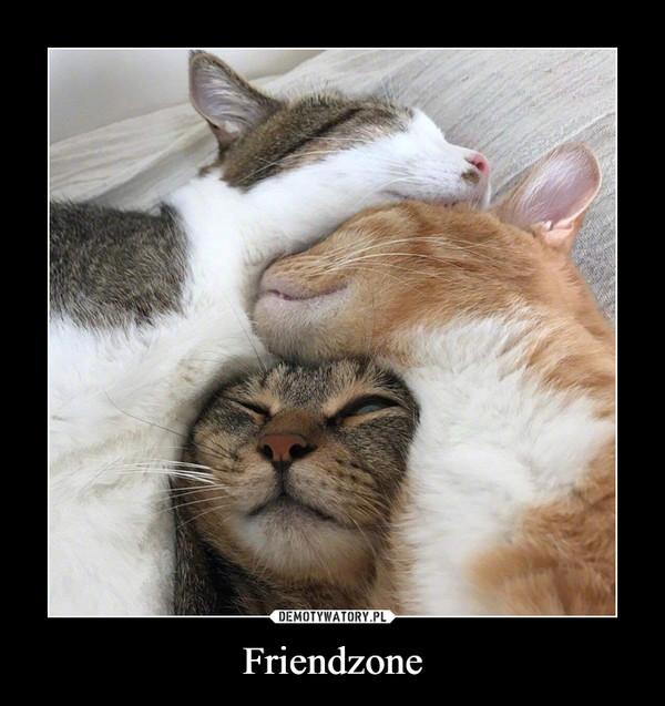 Friendzone –
