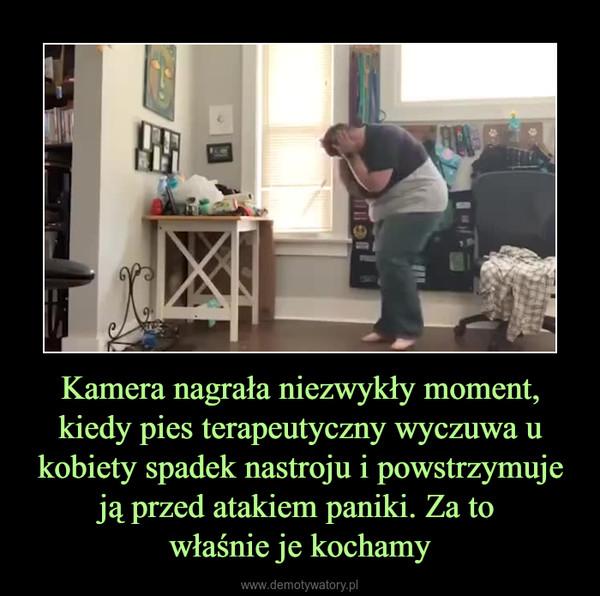 Kamera nagrała niezwykły moment, kiedy pies terapeutyczny wyczuwa u kobiety spadek nastroju i powstrzymuje ją przed atakiem paniki. Za to właśnie je kochamy –