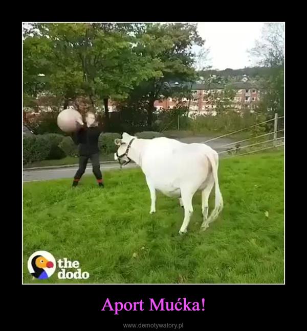 Aport Mućka! –