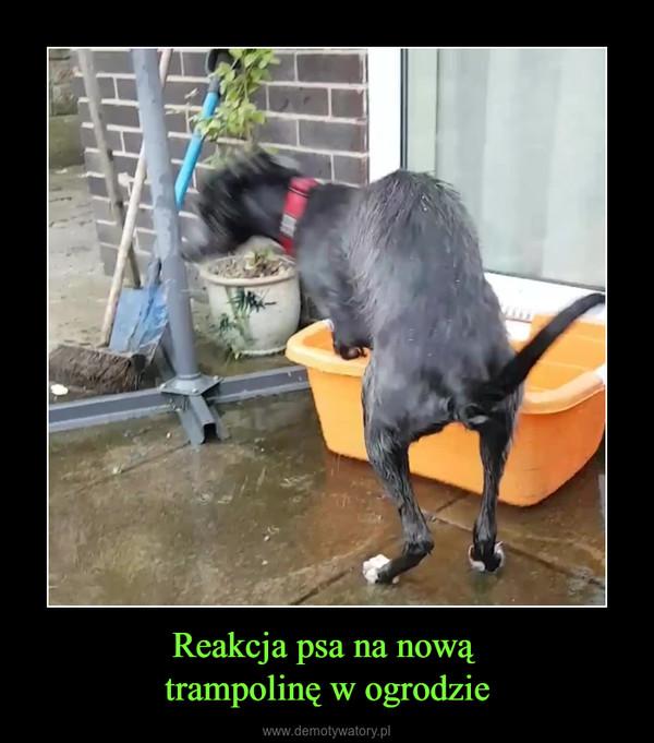 Reakcja psa na nową trampolinę w ogrodzie –