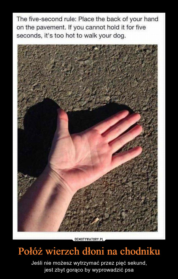 Połóż wierzch dłoni na chodniku – Jeśli nie możesz wytrzymać przez pięć sekund,jest zbyt gorąco by wyprowadzić psa The five-second rule: Place the back of your handon the pavement. If you cannot hold it for fiveseconds, it's too hot to walk your dog.