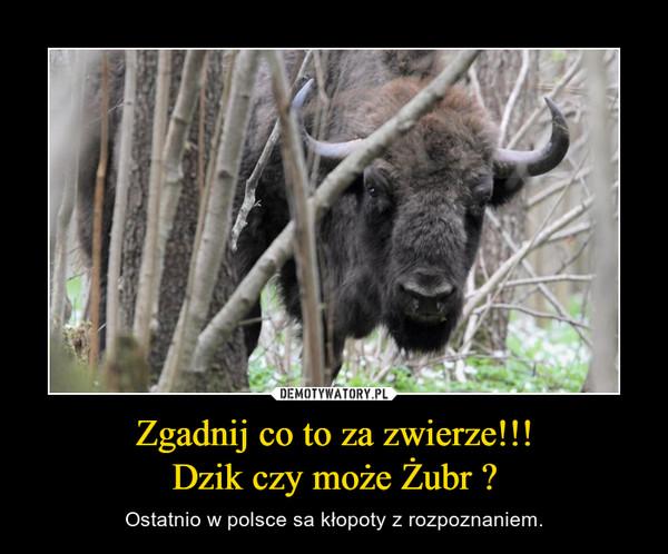 Zgadnij co to za zwierze!!!Dzik czy może Żubr ? – Ostatnio w polsce sa kłopoty z rozpoznaniem.