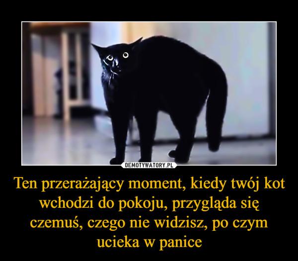Ten przerażający moment, kiedy twój kot wchodzi do pokoju, przygląda się czemuś, czego nie widzisz, po czym ucieka w panice –