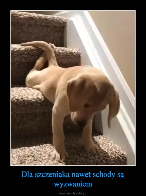 Dla szczeniaka nawet schody są wyzwaniem –