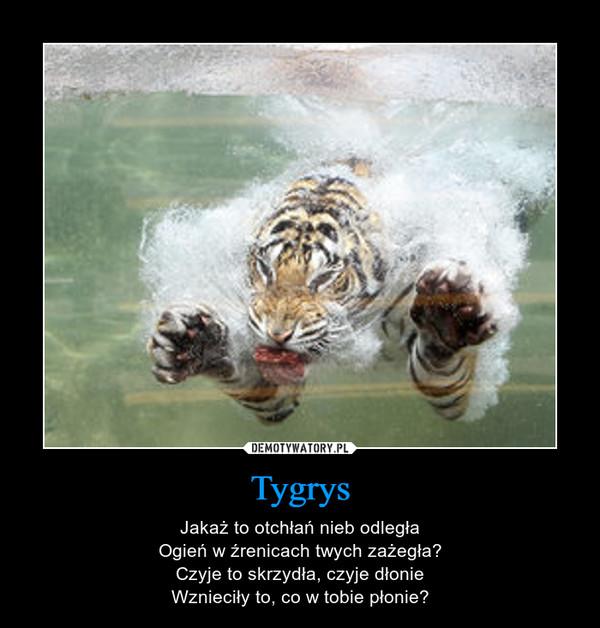 Tygrys – Jakaż to otchłań nieb odległaOgień w źrenicach twych zażegła?Czyje to skrzydła, czyje dłonieWznieciły to, co w tobie płonie?