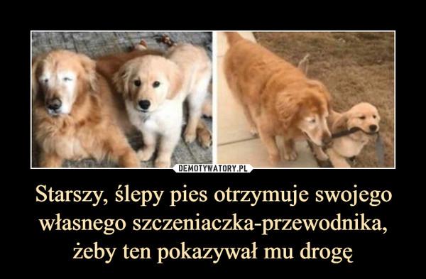 Starszy, ślepy pies otrzymuje swojego własnego szczeniaczka-przewodnika, żeby ten pokazywał mu drogę –