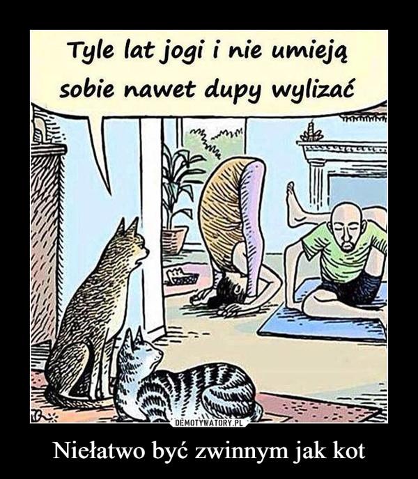 Niełatwo być zwinnym jak kot –  Tyle lat jogi i nie umieją sobie nawet dupy wylizać