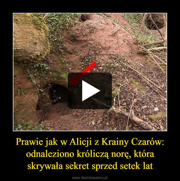 Prawie jak w Alicji z Krainy Czarów: odnaleziono króliczą norę, która skrywała sekret sprzed setek lat –