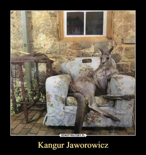 Kangur Jaworowicz