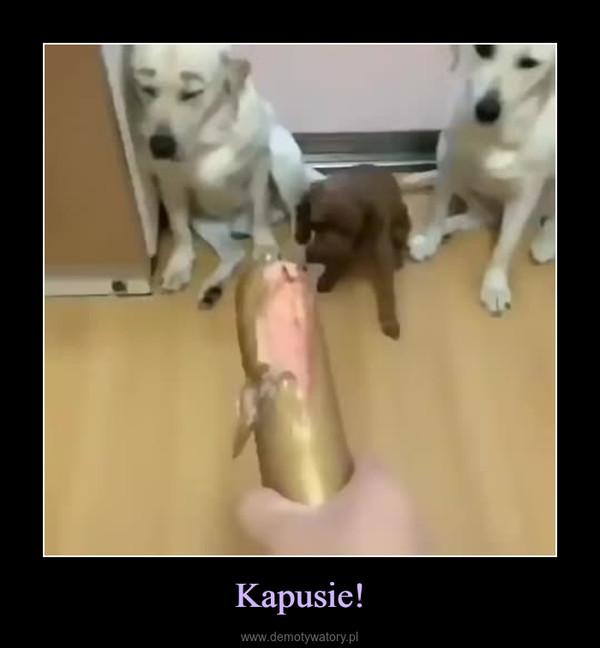 Kapusie! –