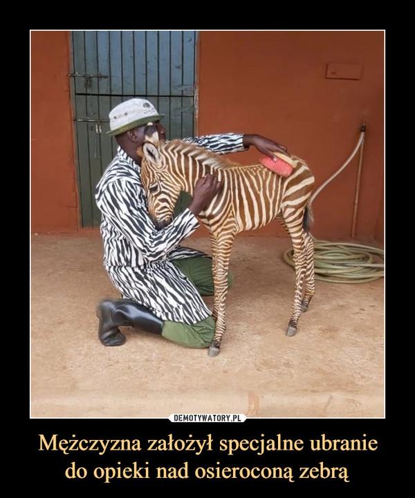 Mężczyzna założył specjalne ubraniedo opieki nad osieroconą zebrą –