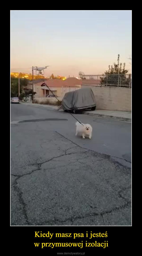 Kiedy masz psa i jesteśw przymusowej izolacji –