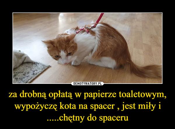 za drobną opłatą w papierze toaletowym, wypożyczę kota na spacer , jest miły i .....chętny do spaceru –
