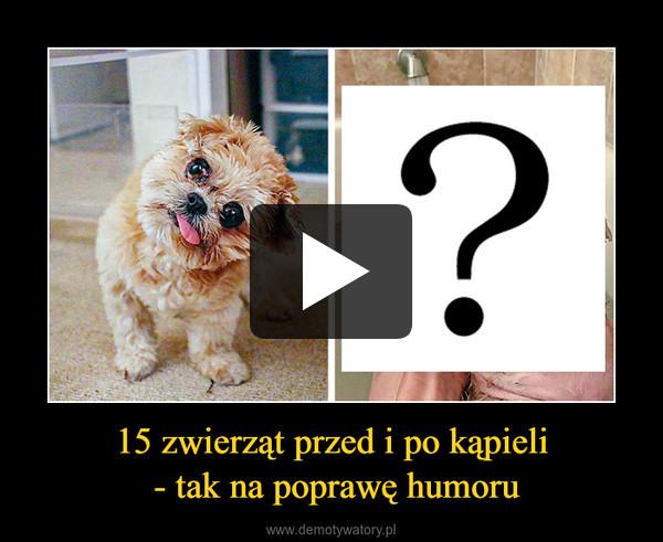 15 zwierząt przed i po kąpieli - tak na poprawę humoru –
