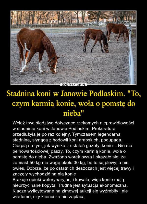 """Stadnina koni w Janowie Podlaskim. """"To, czym karmią konie, woła o pomstę do nieba"""" – Wciąż trwa śledztwo dotyczące rzekomych nieprawidłowości w stadninie koni w Janowie Podlaskim. Prokuratura przedłużyła je po raz kolejny. Tymczasem legendarna stadnina, słynąca z hodowli koni arabskich, podupada.Cierpią na tym, jak wynika z ustaleń gazety, konie. - Nie ma pełnowartościowej paszy. To, czym karmią konie, woła o pomstę do nieba. Zważono worek owsa i okazało się, że zamiast 50 kg ma wagę około 30 kg, bo to są plewy, a nie owies. Dobrze, że po ostatnich deszczach jest więcej trawy i zaczęły wychodzić na nią konieBrakuje opieki weterynaryjnej i kowala, więc konie mają nieprzycinane kopyta. Trudna jest sytuacja ekonomiczna. Klacze wylicytowane na zimowej aukcji się wyźrebiły i nie wiadomo, czy klienci za nie zapłacą"""