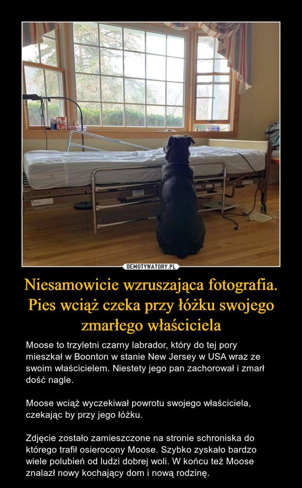Niesamowicie wzruszająca fotografia. Pies wciąż czeka przy łóżku swojego zmarłego właściciela – Moose to trzyletni czarny labrador, który do tej pory mieszkał w Boonton w stanie New Jersey w USA wraz ze swoim właścicielem. Niestety jego pan zachorował i zmarł dość nagle.Moose wciąż wyczekiwał powrotu swojego właściciela, czekając by przy jego łóżku.Zdjęcie zostało zamieszczone na stronie schroniska do którego trafił osierocony Moose. Szybko zyskało bardzo wiele polubień od ludzi dobrej woli. W końcu też Moose znalazł nowy kochający dom i nową rodzinę.