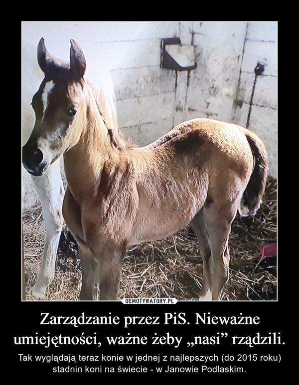 """Zarządzanie przez PiS. Nieważne umiejętności, ważne żeby """"nasi"""" rządzili. – Tak wyglądają teraz konie w jednej z najlepszych (do 2015 roku) stadnin koni na świecie - w Janowie Podlaskim."""