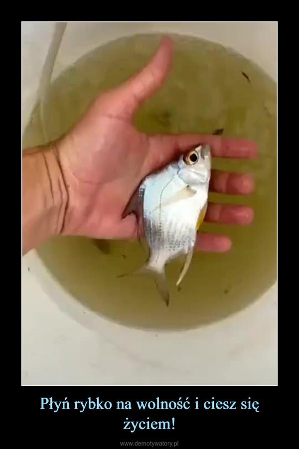 Płyń rybko na wolność i ciesz się życiem! –