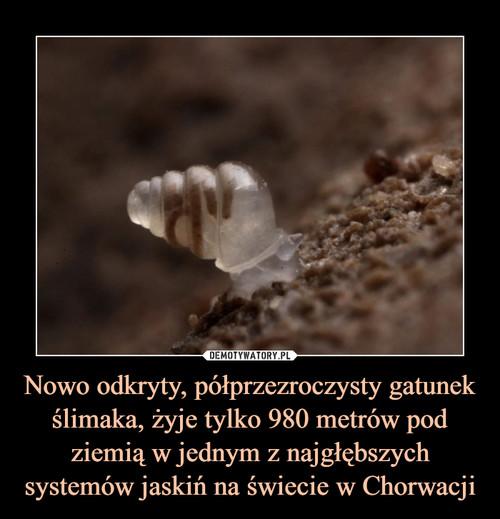 Nowo odkryty, półprzezroczysty gatunek ślimaka, żyje tylko 980 metrów pod ziemią w jednym z najgłębszych systemów jaskiń na świecie w Chorwacji