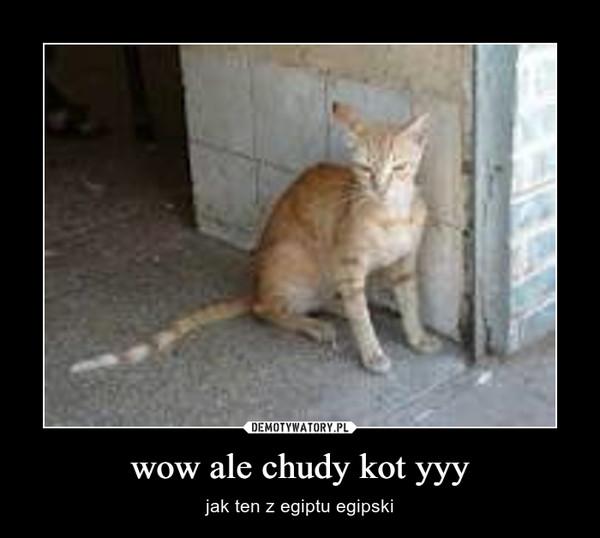 wow ale chudy kot yyy – jak ten z egiptu egipski
