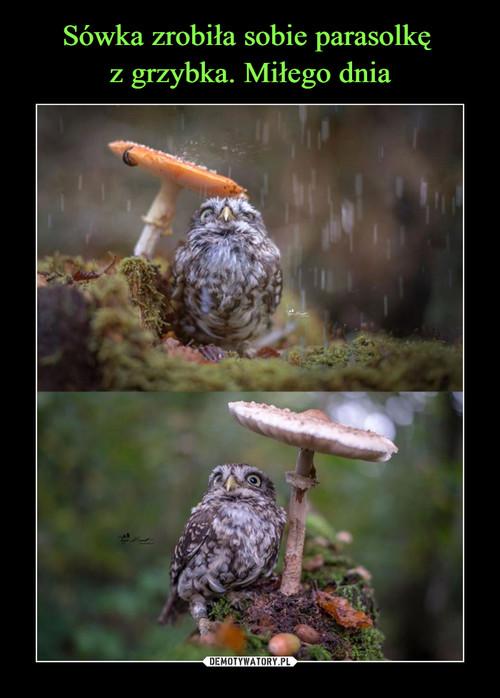 Sówka zrobiła sobie parasolkę  z grzybka. Miłego dnia