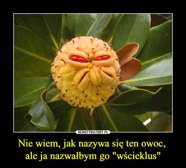 """Nie wiem, jak nazywa się ten owoc, ale ja nazwałbym go """"wścieklus"""" –"""