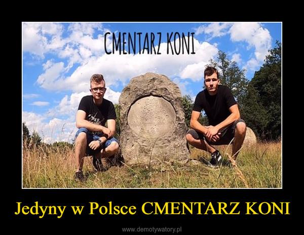 Jedyny w Polsce CMENTARZ KONI –