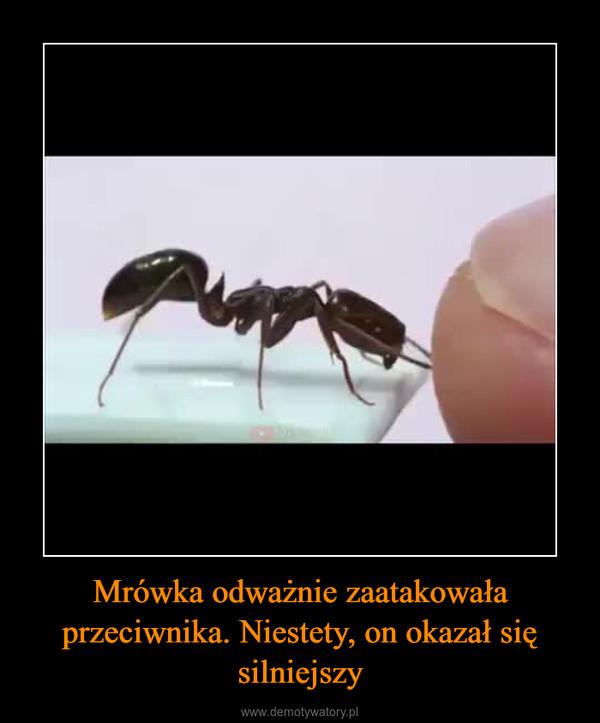 Mrówka odważnie zaatakowała przeciwnika. Niestety, on okazał się silniejszy –