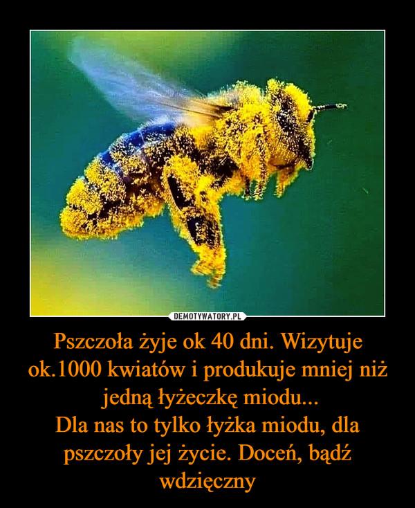 Pszczoła żyje ok 40 dni. Wizytuje ok.1000 kwiatów i produkuje mniej niż jedną łyżeczkę miodu...Dla nas to tylko łyżka miodu, dla pszczoły jej życie. Doceń, bądź wdzięczny –