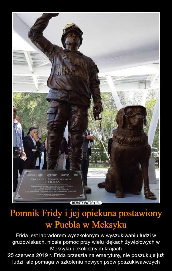 Pomnik Fridy i jej opiekuna postawiony w Puebla w Meksyku – Frida jest labradorem wyszkolonym w wyszukiwaniu ludzi w gruzowiskach, niosła pomoc przy wielu klękach żywiołowych w Meksyku i okolicznych krajach25 czerwca 2019 r. Frida przeszła na emeryturę, nie poszukuje już ludzi, ale pomaga w szkoleniu nowych psów poszukiwawczych