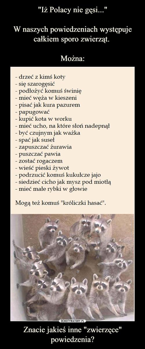 """""""Iż Polacy nie gęsi...""""   W naszych powiedzeniach występuje całkiem sporo zwierząt.   Można: Znacie jakieś inne """"zwierzęce"""" powiedzenia?"""