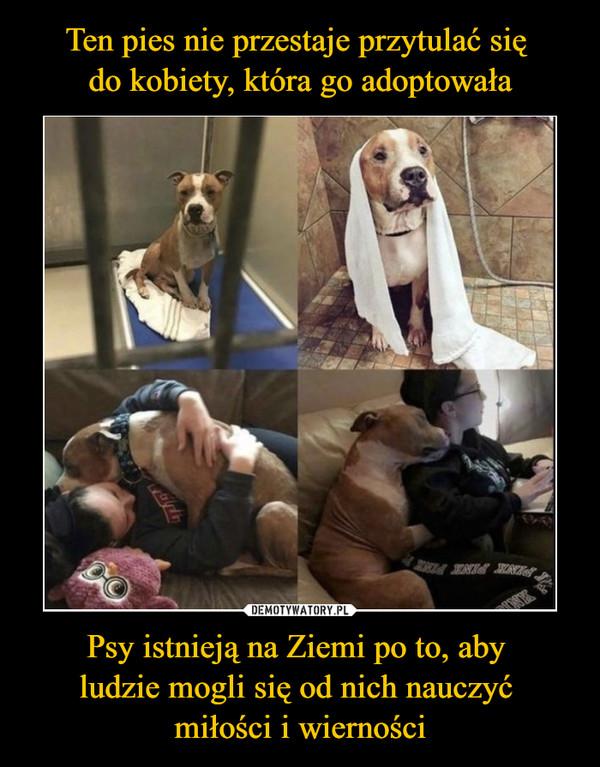 Psy istnieją na Ziemi po to, aby ludzie mogli się od nich nauczyć miłości i wierności –