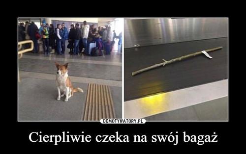 Cierpliwie czeka na swój bagaż