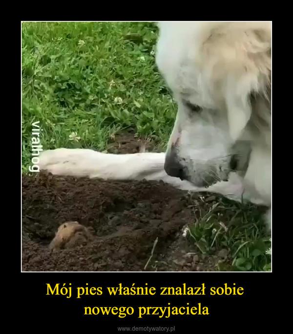 Mój pies właśnie znalazł sobie nowego przyjaciela –