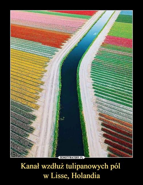 Kanał wzdłuż tulipanowych pól  w Lisse, Holandia