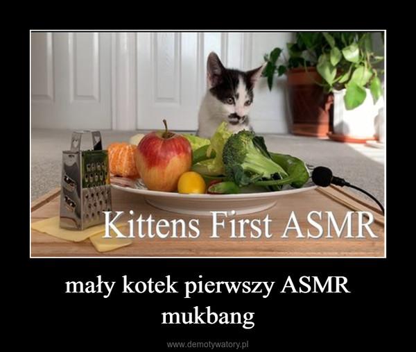 mały kotek pierwszy ASMR mukbang –