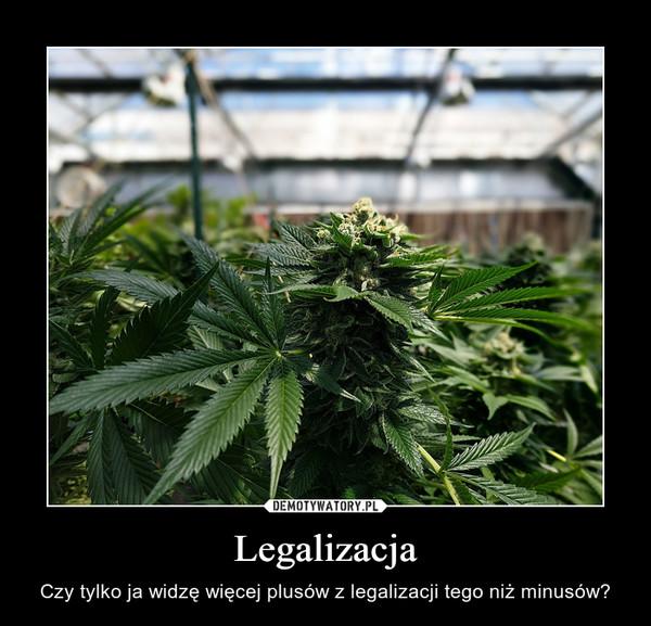 Legalizacja – Czy tylko ja widzę więcej plusów z legalizacji tego niż minusów?