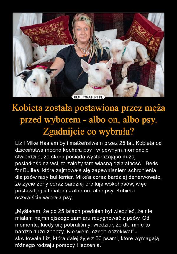 """Kobieta została postawiona przez męża przed wyborem - albo on, albo psy. Zgadnijcie co wybrała? – Liz i Mike Haslam byli małżeństwem przez 25 lat. Kobieta od dzieciństwa mocno kochała psy i w pewnym momencie stwierdziła, że skoro posiada wystarczająco dużą posiadłość na wsi, to założy tam własną działalność - Beds for Bullies, która zajmowała się zapewnianiem schronienia dla psów rasy bullterrier. Mike'a coraz bardziej denerwowało, że życie żony coraz bardziej orbituje wokół psów, więc postawił jej ultimatum - albo on, albo psy. Kobieta oczywiście wybrała psy.""""Myślałam, że po 25 latach powinien był wiedzieć, że nie miałam najmniejszego zamiaru rezygnować z psów. Od momentu, kiedy się pobraliśmy, wiedział, że dla mnie to bardzo dużo znaczy. Nie wiem, czego oczekiwał"""" - skwitowała Liz, która dalej żyje z 30 psami, które wymagają różnego rodzaju pomocy i leczenia."""