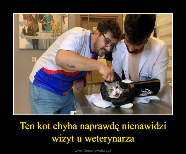 Ten kot chyba naprawdę nienawidzi wizyt u weterynarza –