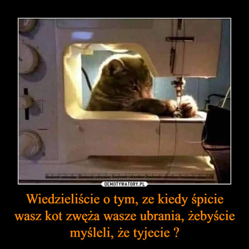 Wiedzieliście o tym, ze kiedy śpicie wasz kot zwęża wasze ubrania, żebyście myśleli, że tyjecie ?