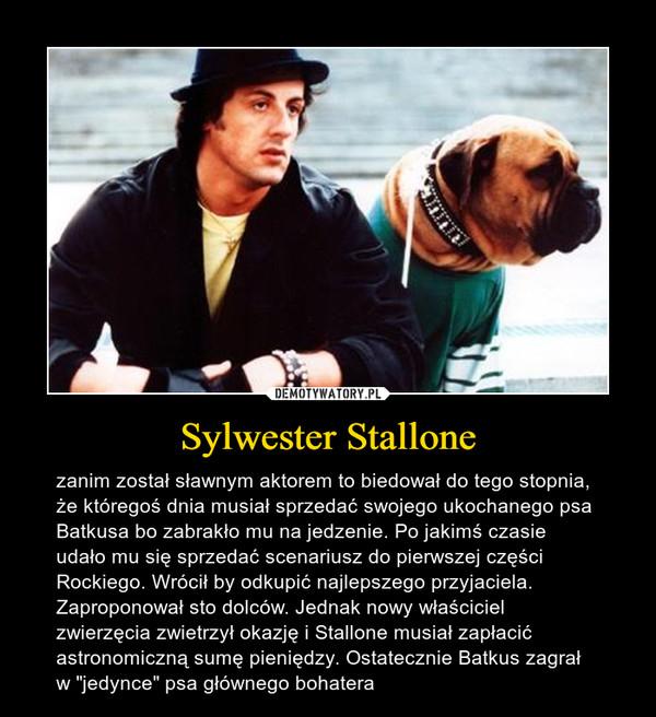 """Sylwester Stallone – zanim został sławnym aktorem to biedował do tego stopnia, że któregoś dnia musiał sprzedać swojego ukochanego psa Batkusa bo zabrakło mu na jedzenie. Po jakimś czasie udało mu się sprzedać scenariusz do pierwszej części Rockiego. Wrócił by odkupić najlepszego przyjaciela. Zaproponował sto dolców. Jednak nowy właściciel zwierzęcia zwietrzył okazję i Stallone musiał zapłacić astronomiczną sumę pieniędzy. Ostatecznie Batkus zagrał w """"jedynce"""" psa głównego bohatera"""