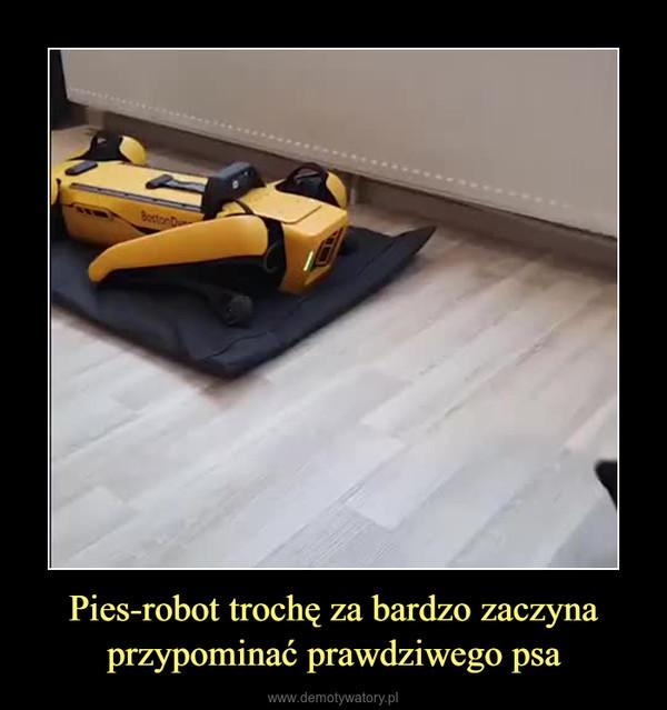 Pies-robot trochę za bardzo zaczyna przypominać prawdziwego psa –