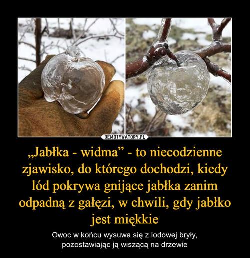 """""""Jabłka - widma"""" - to niecodzienne zjawisko, do którego dochodzi, kiedy lód pokrywa gnijące jabłka zanim odpadną z gałęzi, w chwili, gdy jabłko jest miękkie"""