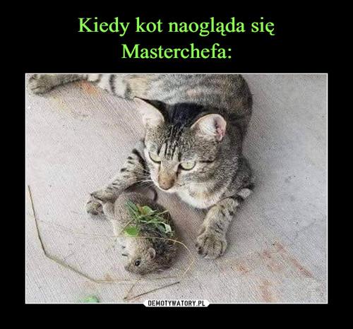Kiedy kot naogląda się Masterchefa: