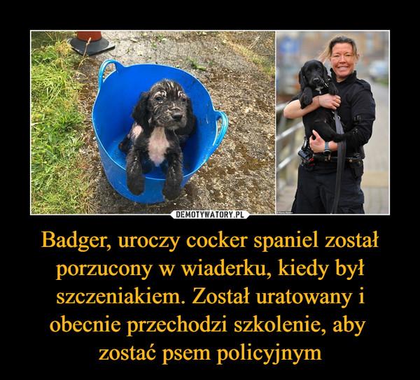 Badger, uroczy cocker spaniel został porzucony w wiaderku, kiedy był szczeniakiem. Został uratowany i obecnie przechodzi szkolenie, aby zostać psem policyjnym –