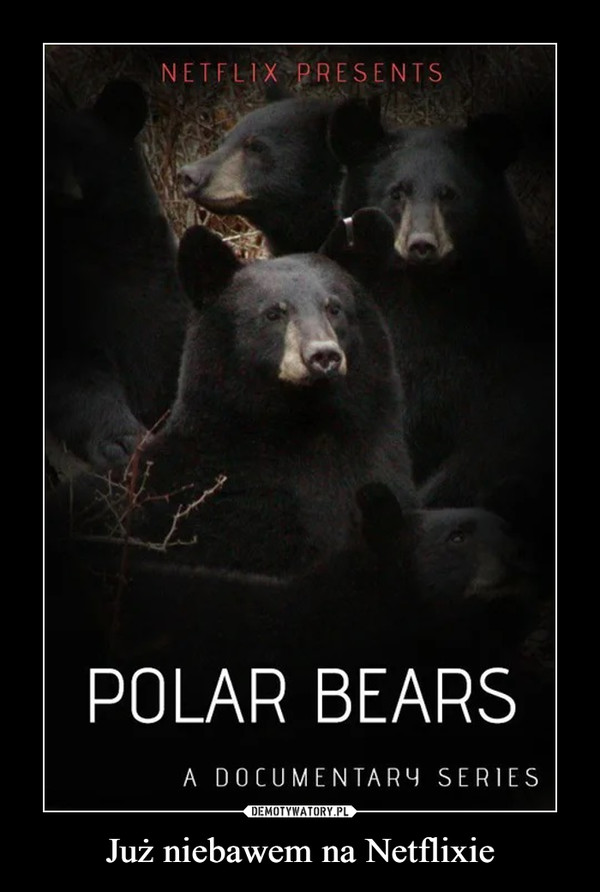 Już niebawem na Netflixie –  Polar Bears Netflix Presents A documentary series
