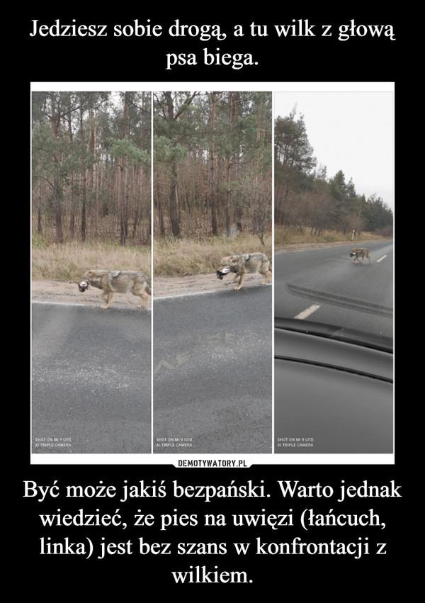 Być może jakiś bezpański. Warto jednak wiedzieć, że pies na uwięzi (łańcuch, linka) jest bez szans w konfrontacji z wilkiem. –