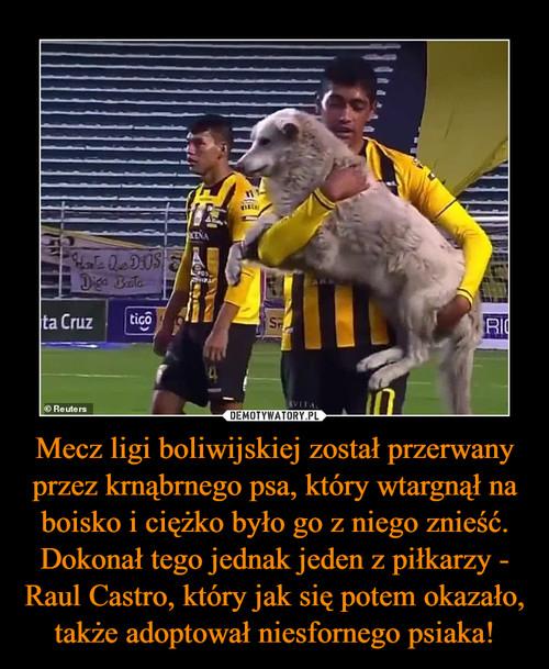 Mecz ligi boliwijskiej został przerwany przez krnąbrnego psa, który wtargnął na boisko i ciężko było go z niego znieść. Dokonał tego jednak jeden z piłkarzy - Raul Castro, który jak się potem okazało, także adoptował niesfornego psiaka!