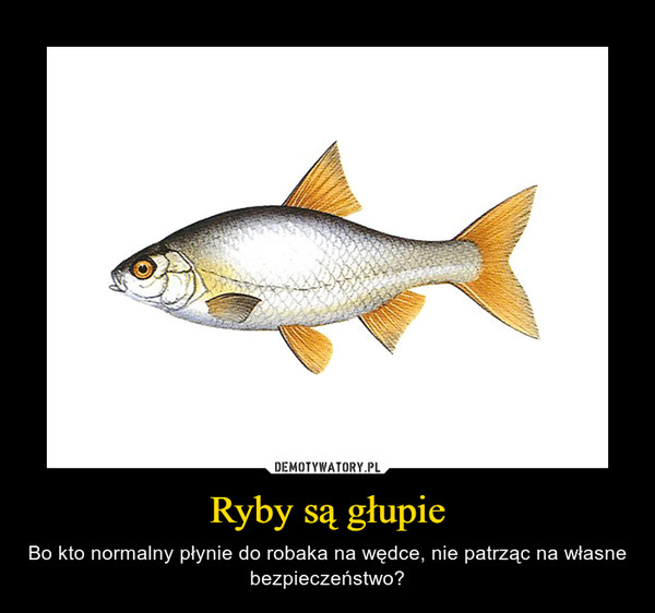 Ryby są głupie – Bo kto normalny płynie do robaka na wędce, nie patrząc na własne bezpieczeństwo?